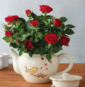 50 Valentine's Day Gifts For Her Under $50 - Songbird Mini Rose Teapot